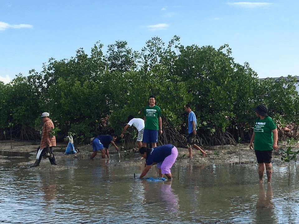 PODC Mangrove